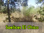 SaelicesElChico.jpg